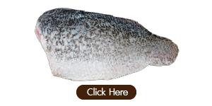ปลากะพง-01