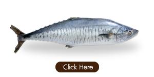 ปลาอินทรีย์